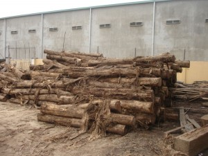 log cutting area